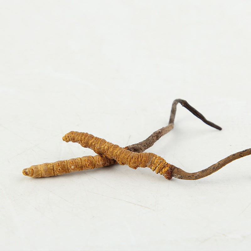 Authentic Tibetan Naqu Wild Cordyceps sinensis Chinese herbal medicines Bulk Cordyceps complete specifications to send exquisite gift boxes
