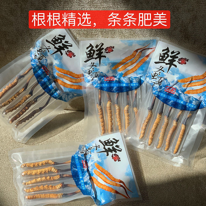 2019 high altitude fresh Cordyceps sinensis Tibet Naqu Qinghai origin direct wild Cordyceps complete specifications