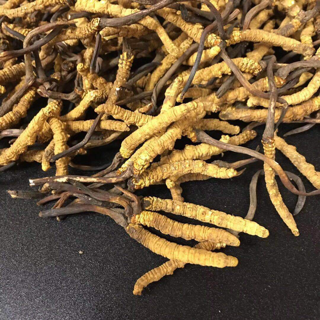 Selected Tibet Nagqu Cordyceps Wholesale 4 / g Authentic Cordyceps Selected Unbroken Grass 2019 New Grass