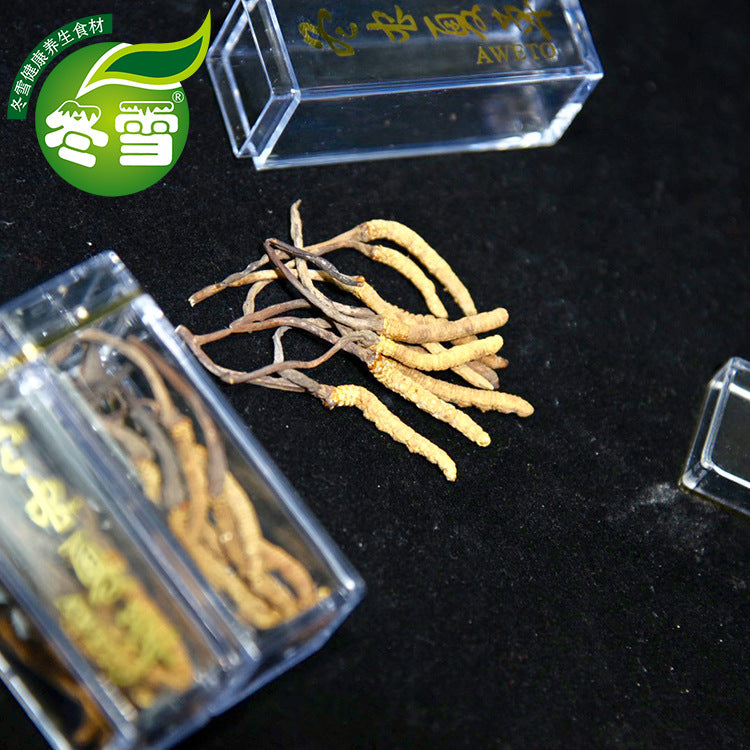 【Net red bug】Gifts direct batch traceability Cordyceps sinensis a generation of Taobao supply lightning delivery