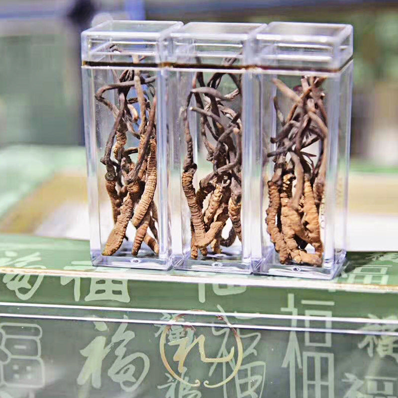 【Net red bug】Gift dressing area direct batch of Cordyceps sinensis a generation of Taobao supply lightning delivery