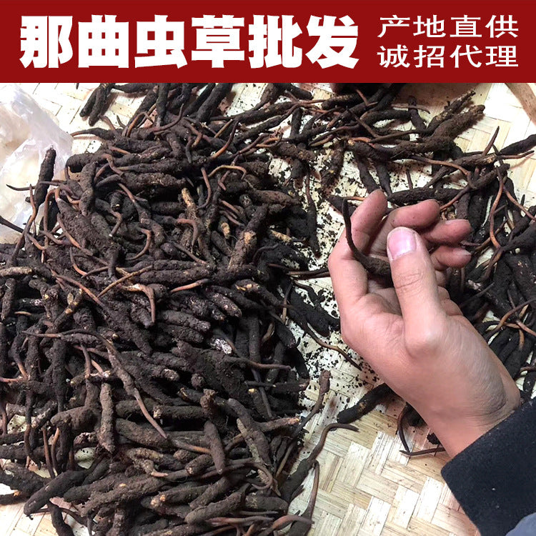 Wholesale Authentic Natto Cordyceps sinensis Wild Cordyceps sinensis Multi-species High-altitude Cordyceps Foot Dry 10g