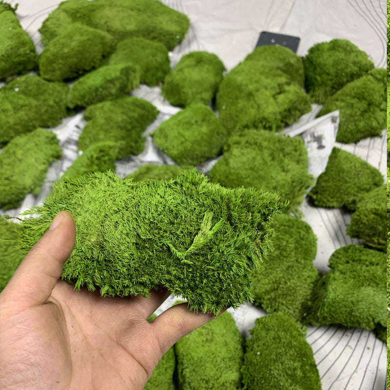 Moss micro landscape ecological bottle fresh white hair small white hair micro landscape accessories material