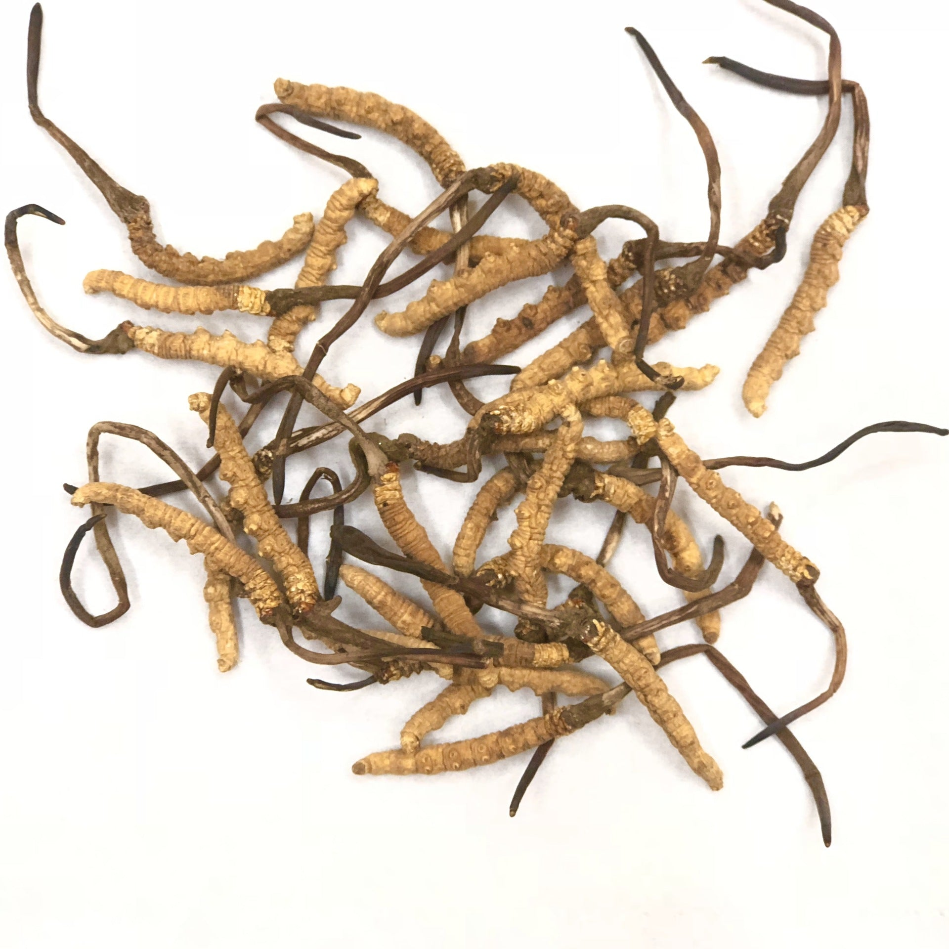 Nagto Cordyceps sinensis, dried stems, large goods wholesale, traditional tonics, a selection of Cordyceps