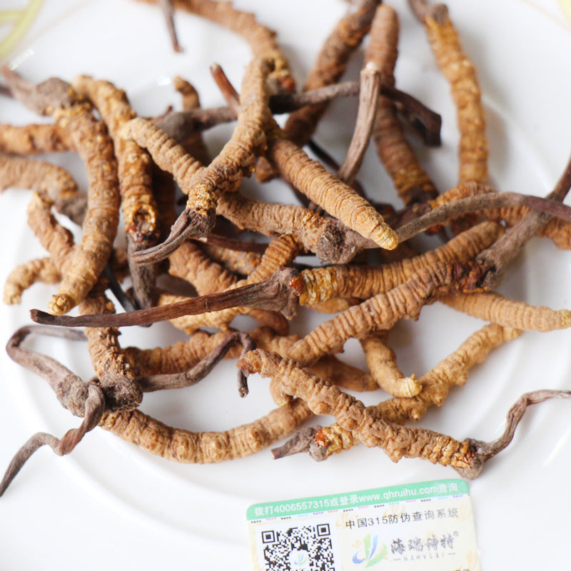 Wholesale Cordyceps sinensis selection 4 / g origin of the first hand dry goods good worm body full and strong