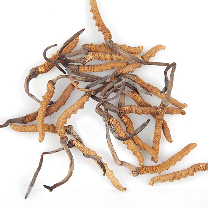 Origin of the supply of Cordyceps sinensis supply Chinese herbal medicines high quality sulfur-free and no miscellaneous worms wholesale 1 gram 4
