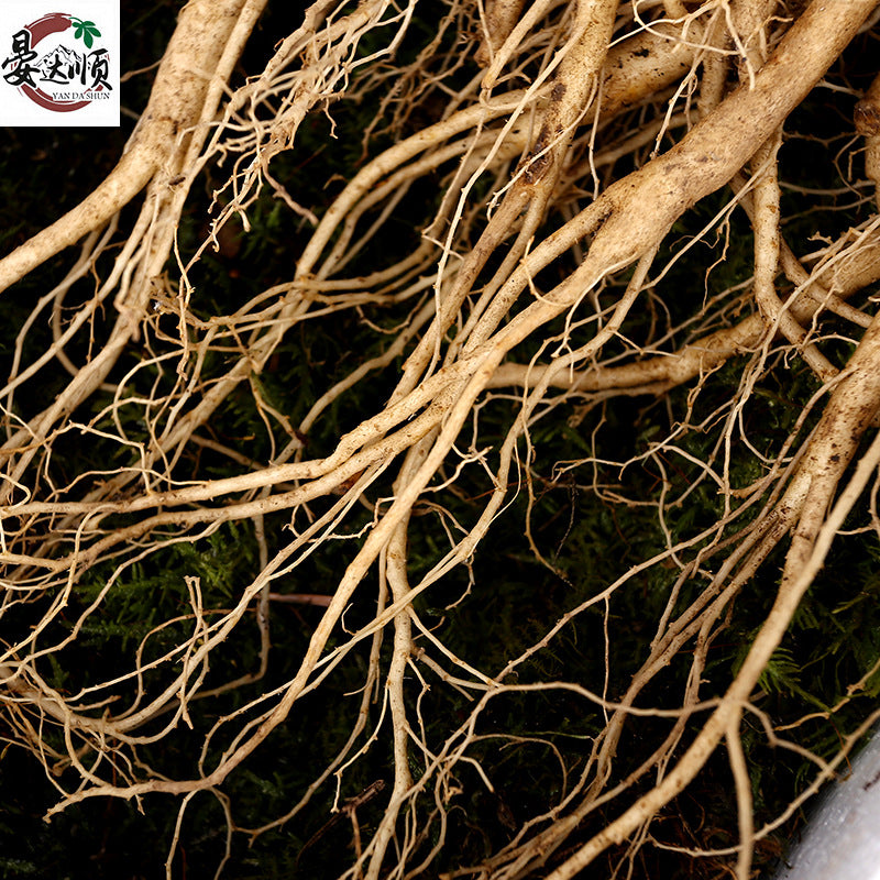 Changbai Mountain fresh ginseng forest ginseng with soil fresh ginseng soup soaked wine nutrition products