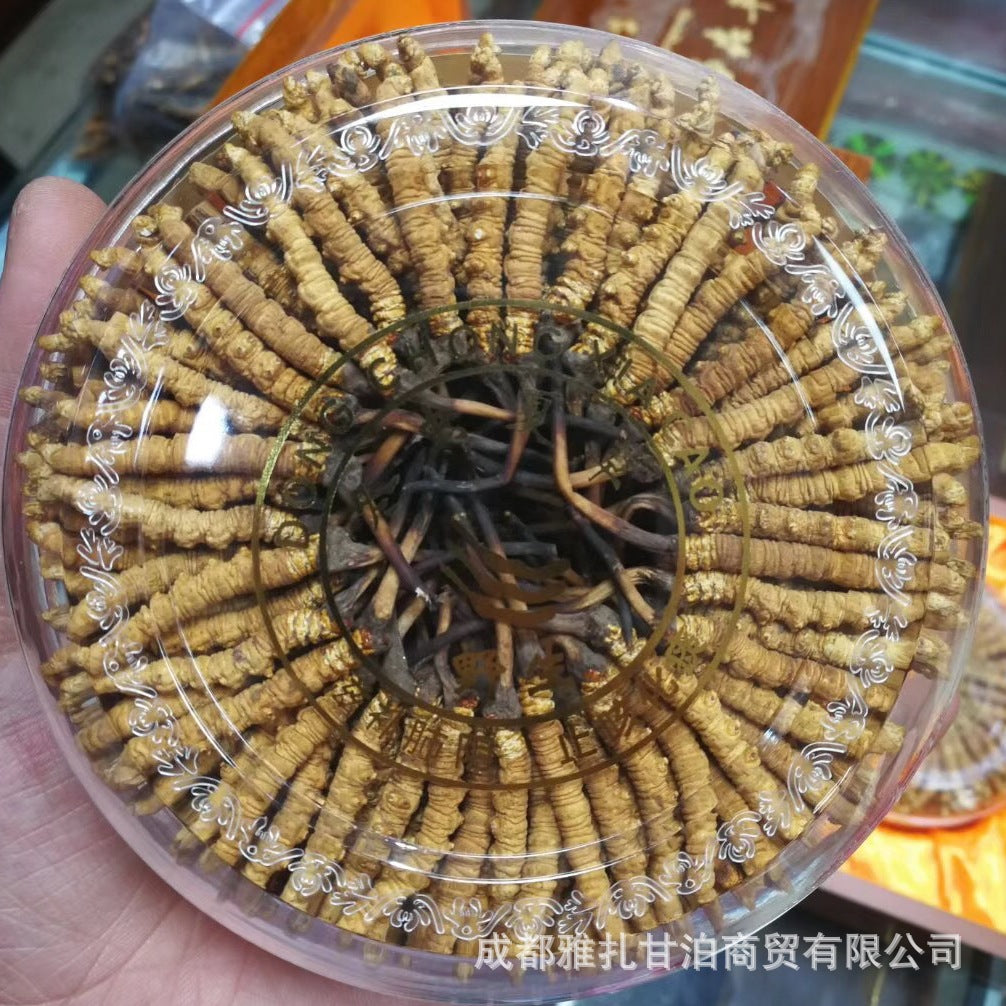 Wholesale Qinghai Yushu Cordyceps sinensis specifications all-in-one dry, no black, self-brushing, sunburn, pregnant women, month supplements