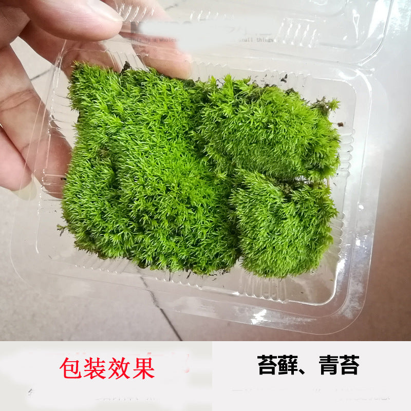 Wholesale fresh moss live moss micro landscape ecological bottle plant diy wild big gray white hair bonsai