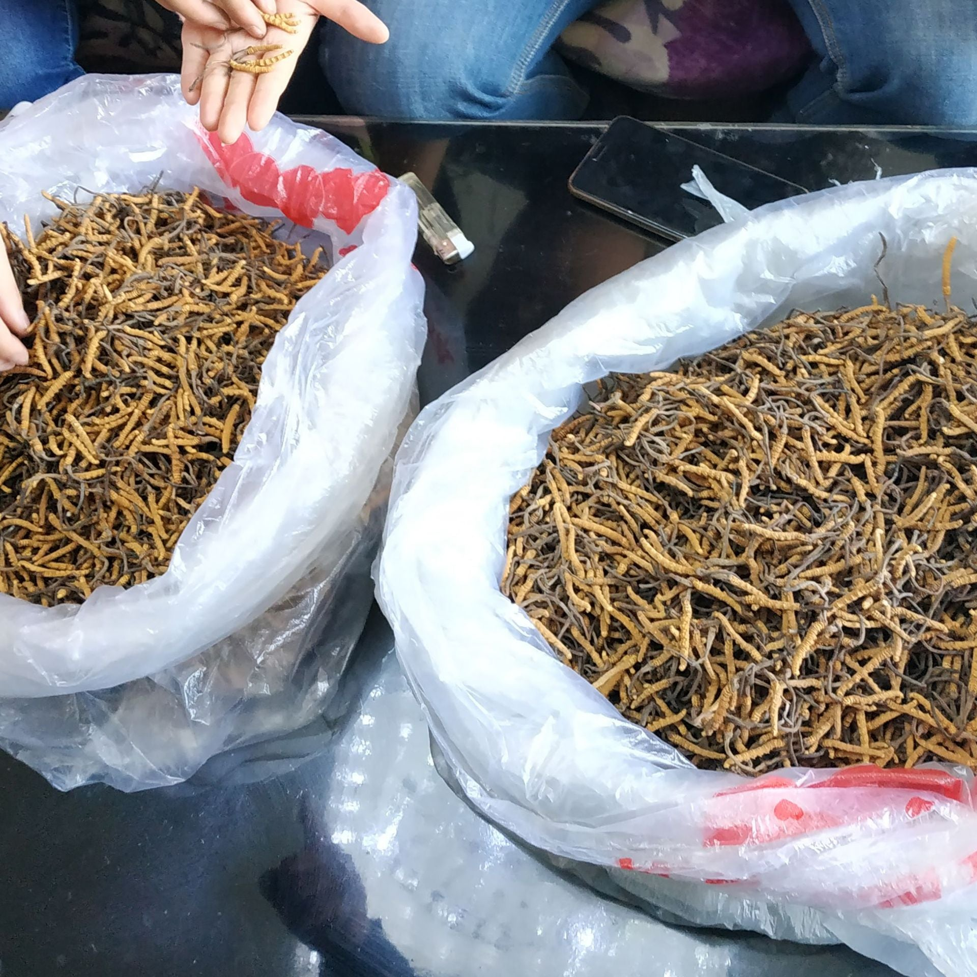 Selected genuine Cordyceps sinensis Qinghai native Tibet Nagqu wild Cordyceps gift box Dongji Yushu non-breaking grass