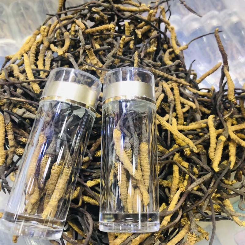 Tibet, Nagqu, Cordyceps sinensis, carefully selected, dried Cordyceps, no toothpick, no broken grass, a bottle of 10