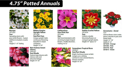 "3a - 4.75"" Potted Annuals"
