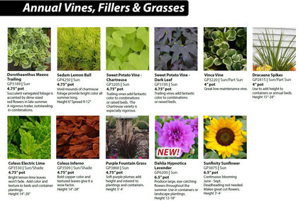3b - Annual Vines, Fillers & Grasses