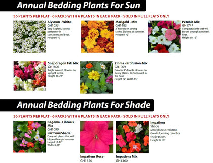 4b - Annual Bedding Plants