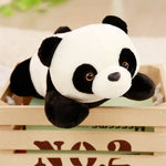 Ours Panda Peluche