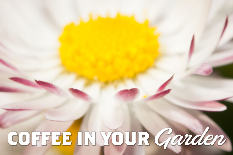 Coffee in your garden text overlaid on a photo of a blooming flower