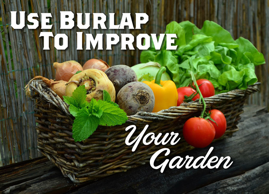 A Basket of fresh produce with the text Use Burlap to Improve Your Garden overlaid