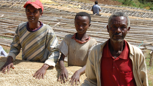 Three workers tending to the raised drying beds.