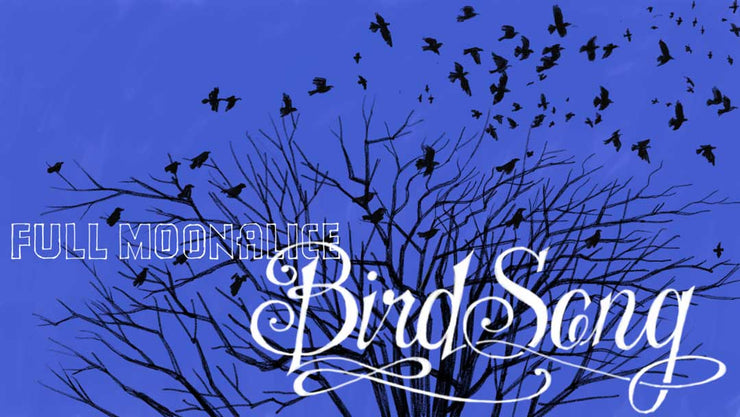 Bird Song (Single) - Free Download
