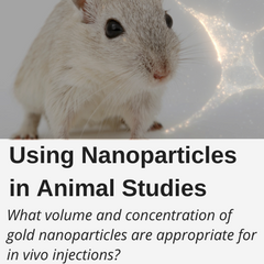 Using Nanoparticles in Animal Studies
