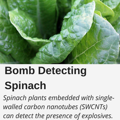 Bomb Detecting Spinach