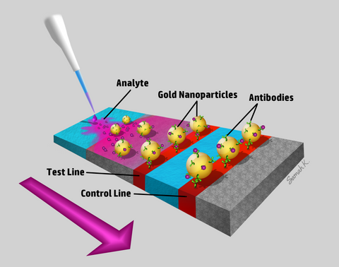 NanoHybrids AuNP for Lateral Flow Tests