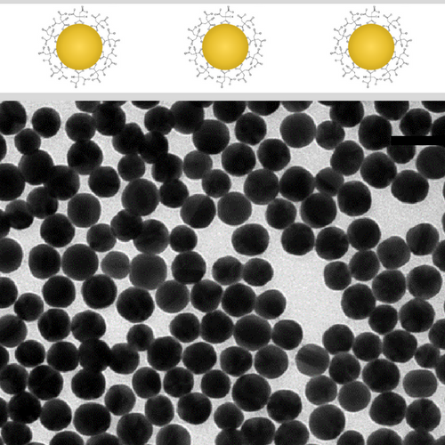 Citrate Stabilized Gold NanoSpheres