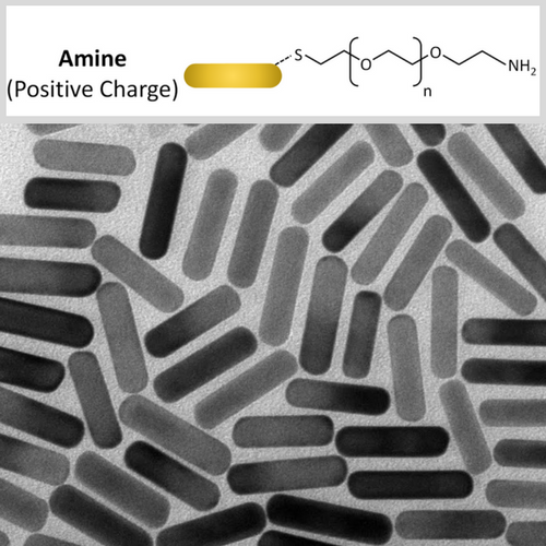 Amine Functionalized Gold NanoRods
