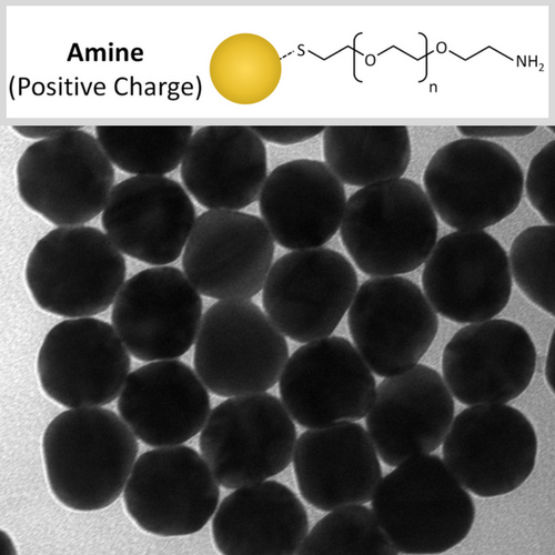 Amine (NH2) Functionalized Gold Nanospheres for Conjugation