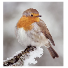 Load image into Gallery viewer, 8x 100% Recycled Wildlife Trust Christmas Cards - Various Designs