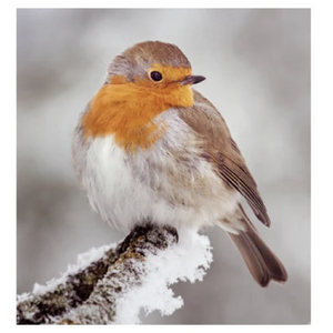 8x 100% Recycled Wildlife Trust Christmas Cards - Various Designs