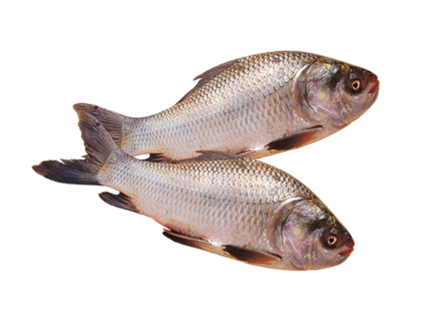 Rohu Fish 4Kg Up