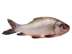 Rohu Fish 2Kg Up