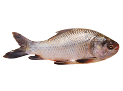 Rohu Fish 3Kg Up