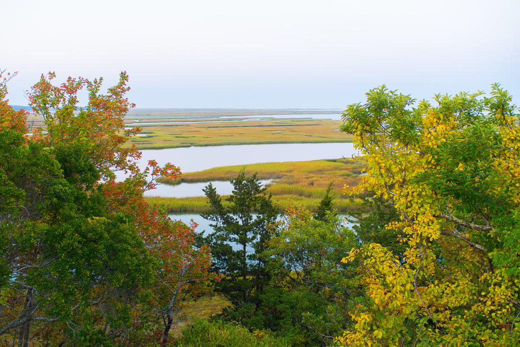 Nauset salt marsh is visible through gaps in the trees lining Fort Hill in the Cape Cod National Seashore.