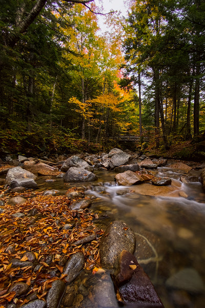 Fall foliage over the Pemigawasett River in Franconia Notch State Park, New Hampshire
