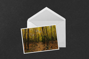 Acadia Aspens Path Greeting Card