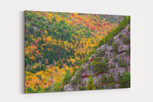 Load image into Gallery viewer, Acadia Cliffs and Trees - Acadia National Park