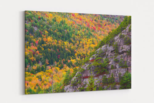 Acadia Fall Foliage - Acadia National Park, ME