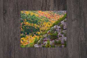 Acadia Cliffs and Trees - Acadia National Park