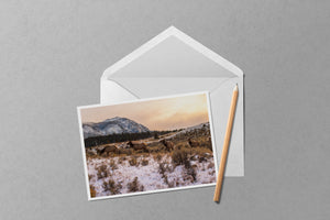 Elk at Sunset in Yellowstone National Park Notecard