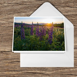 New Hampshire Lupine Sunrise over the White Mountains Greeting Card