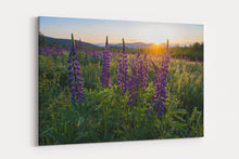 Load image into Gallery viewer, Lupine Glitter