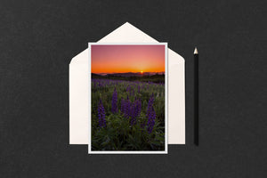 Lupine Sunrise Starburst Notecard