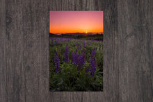 Load image into Gallery viewer, Lupine Sunrise Starburst