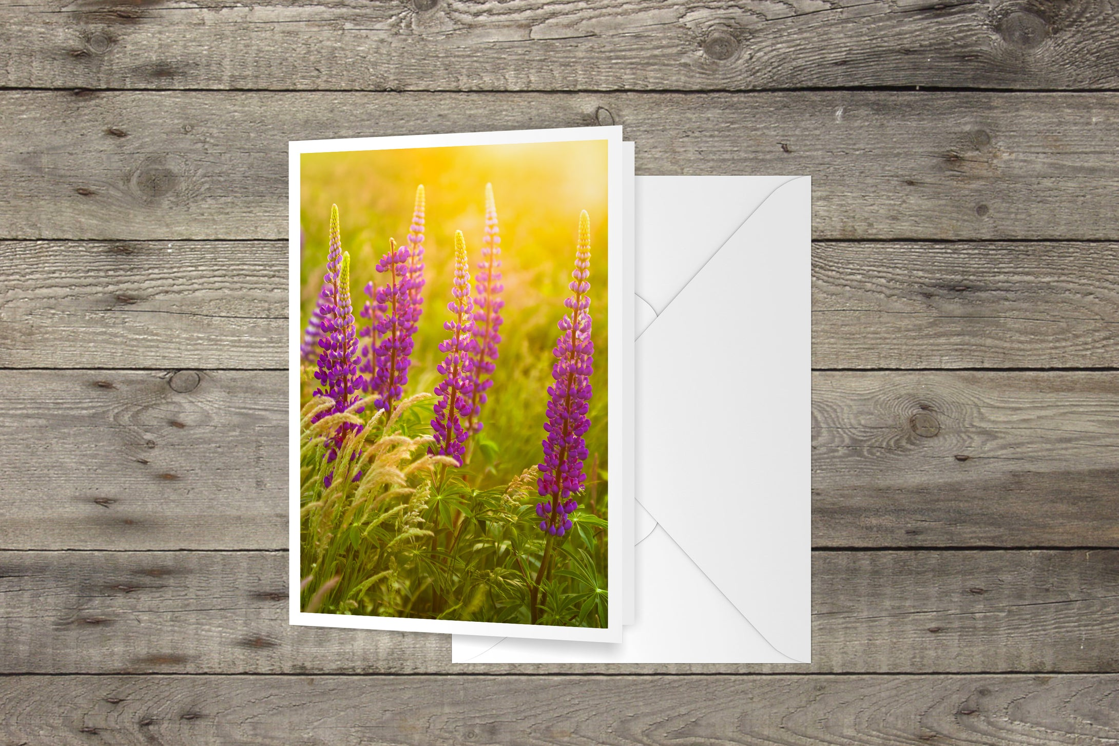Lupines at Sunset Cape Cod National Seashore Notecard