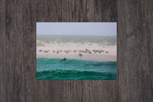 Load image into Gallery viewer, Monomoy Seals - Monomoy National Wildlife Refuge