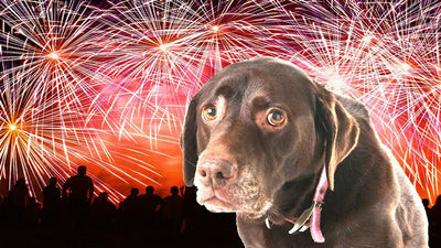 Keep Your Pup Calm During the Fourth of July