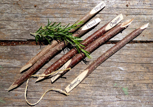 Five French Hazel Herb id Sticks