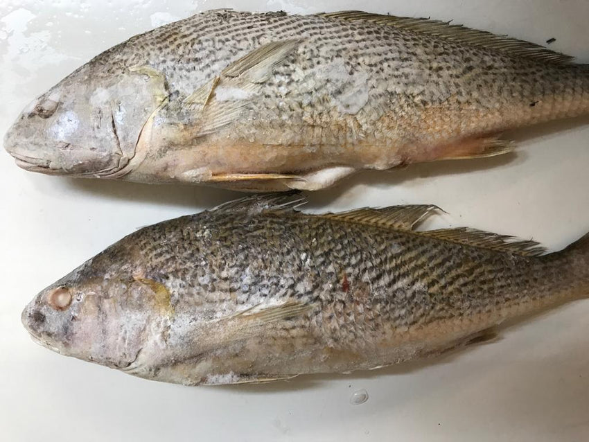 Frozen Croaker Fish (1 Lb) Whole